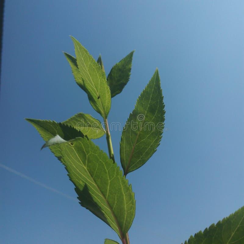Выходит небу зеленое ясное стоковые изображения