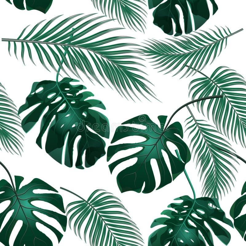 выходит ладонь тропической Чащи джунглей безшовное предпосылки флористическое Изолировано на белизне иллюстрация иллюстрация штока