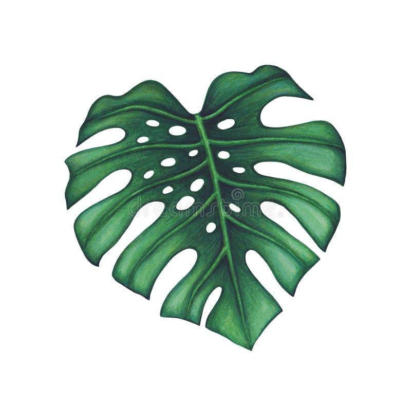 выходит ладонь тропической иллюстрация вектора
