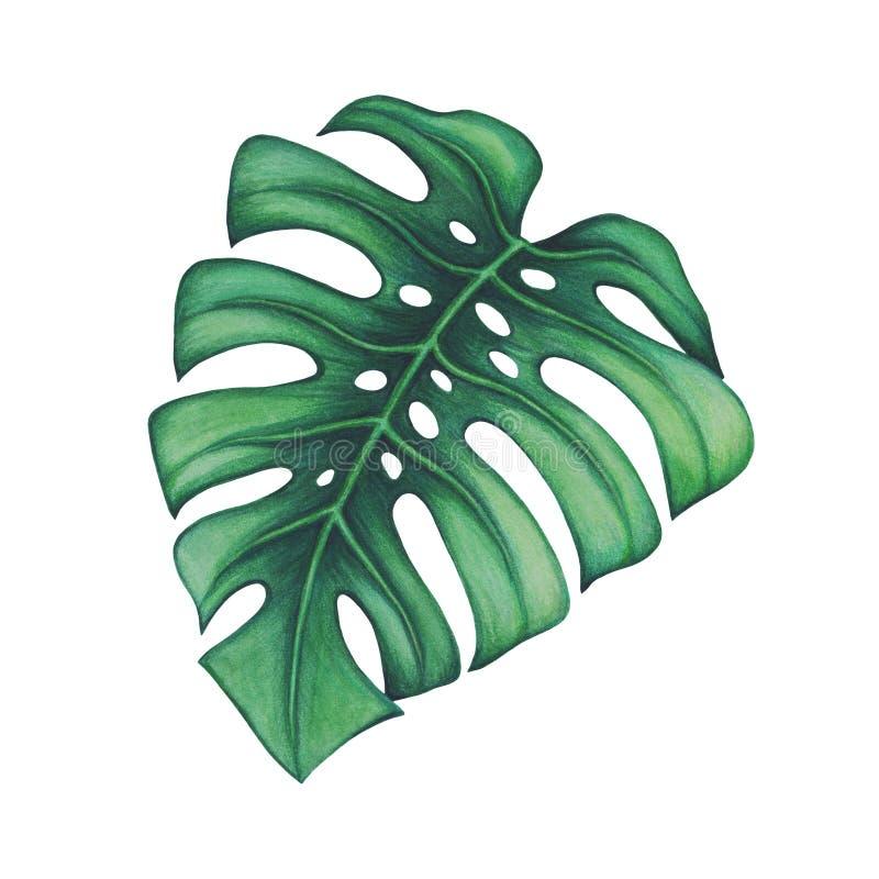 выходит ладонь тропической бесплатная иллюстрация