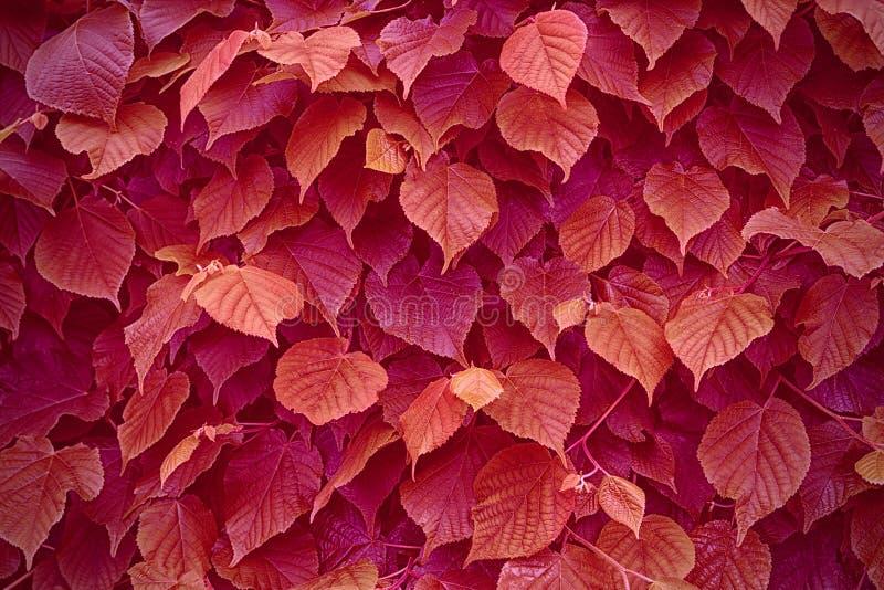 выходит красная текстура стоковое изображение