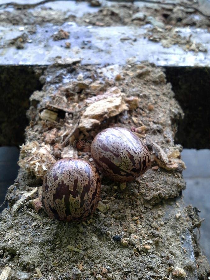 Выходы остатков резины дальше выбирают вверх тележку, Hadyai, Songkhla, Таиланд стоковые изображения