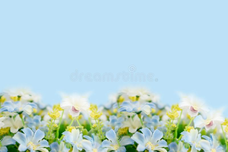Выцветка поддельного цветка на мягком синем фоне стоковая фотография rf