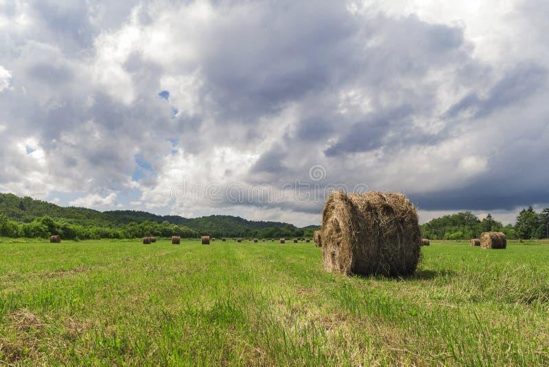 вычерченная иллюстрация руки травы поля стоковые фото