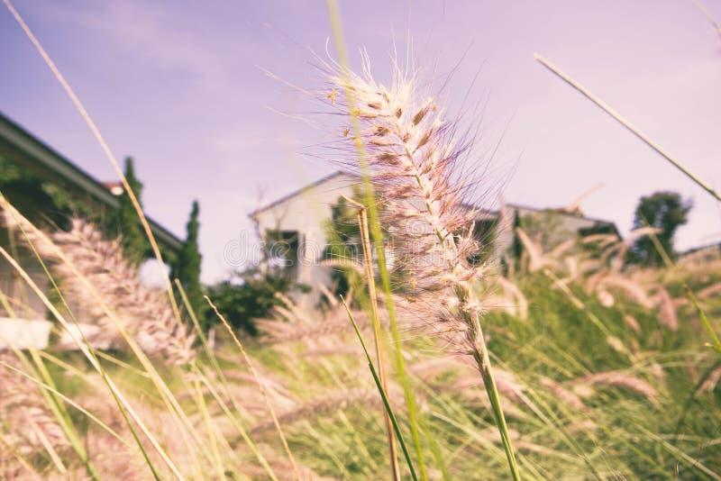 вычерченная иллюстрация руки травы поля стоковая фотография rf