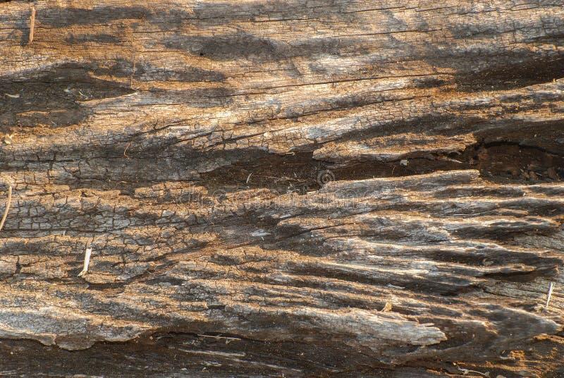 выдержанная древесина стоковые изображения
