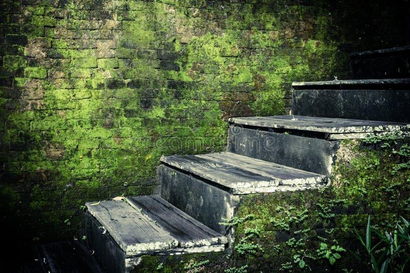 Выдержанные лестницы покинутого тропического дома стоковые изображения