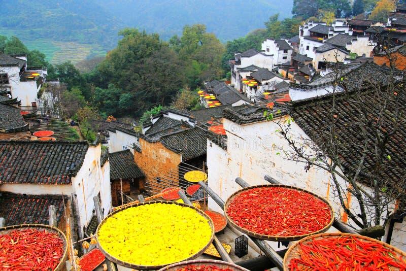 Выдержка урожаев в сезоне осени на деревне Huanglin стоковые изображения