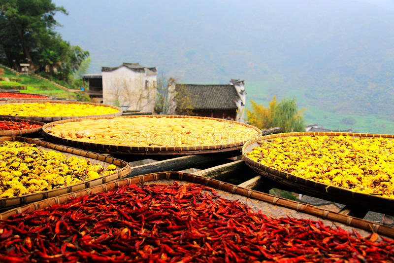 Выдержка урожаев в сезоне осени на деревне Huanglin стоковая фотография rf