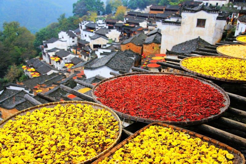 Выдержка урожаев в сезоне осени на деревне Huanglin стоковое фото
