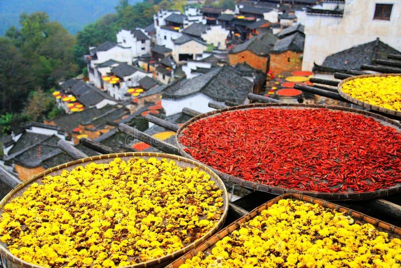Выдержка урожаев в сезоне осени на деревне Huanglin стоковые фото