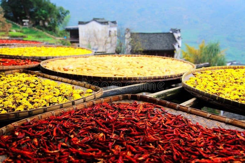 Выдержка урожаев в сезоне осени на деревне Huanglin стоковое изображение