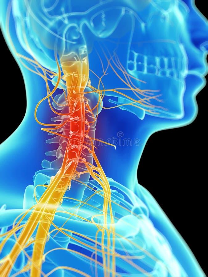 Выделенные нервы шеи иллюстрация штока