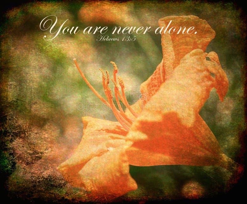 Вы никогда одни - сфотографируйте с стихом библии, 13:5 Hebrews стоковое фото rf