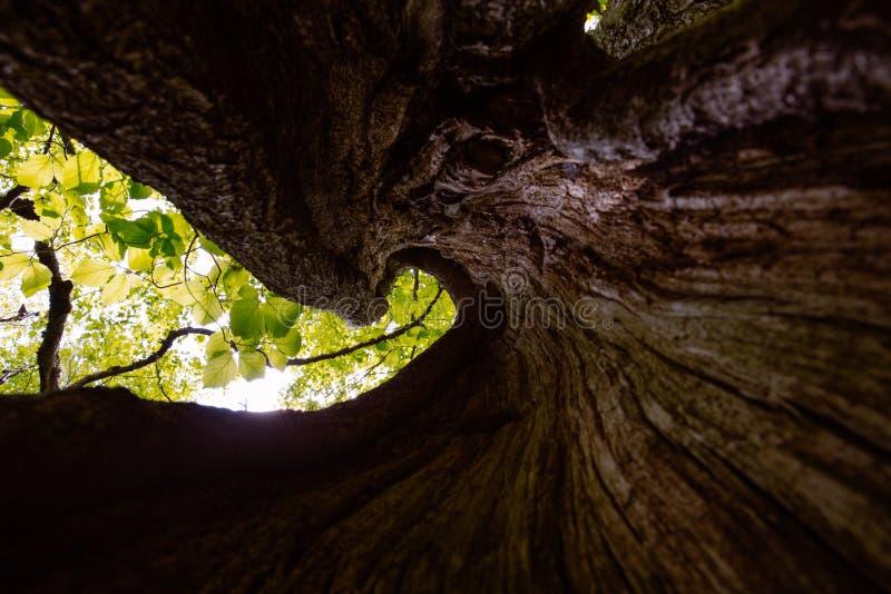 Выдолбленное вне дерево стоковые фото