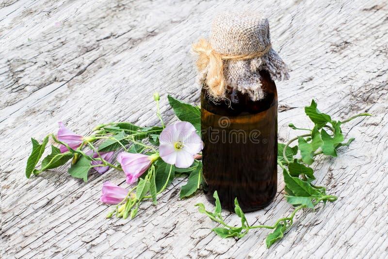 Вьюнок поля (arvensis повилики) и фармацевтическая бутылка стоковое фото