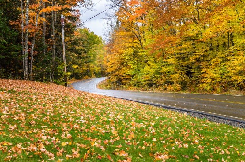 Влажная извилистая дорога через красочный лес стоковые изображения