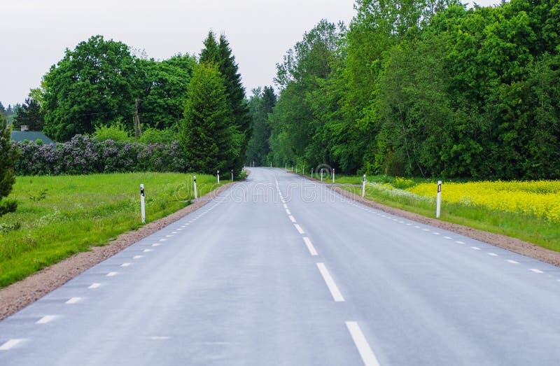 Влажная дорога рядом с полем рэпов стоковые фото