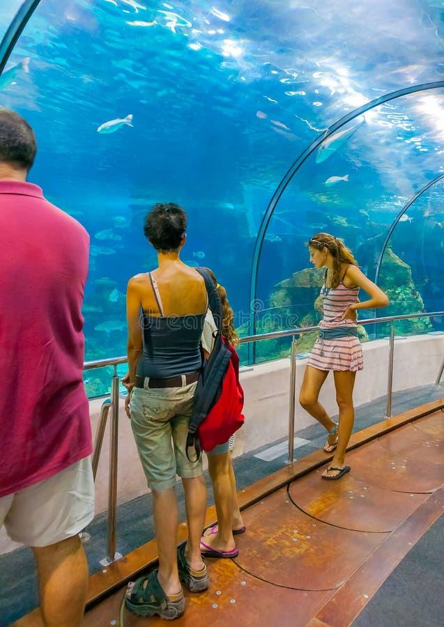 В аквариуме Барселоны стоковое фото