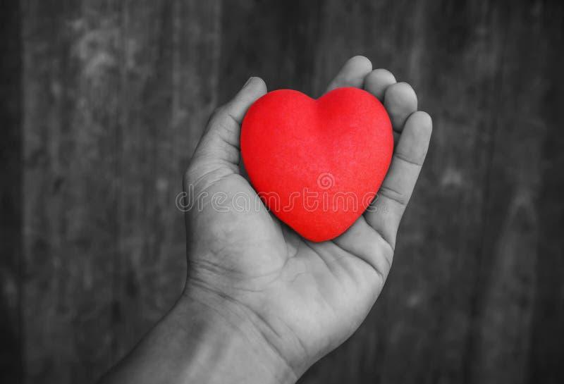 Владение руки человека красное сердце стоковая фотография
