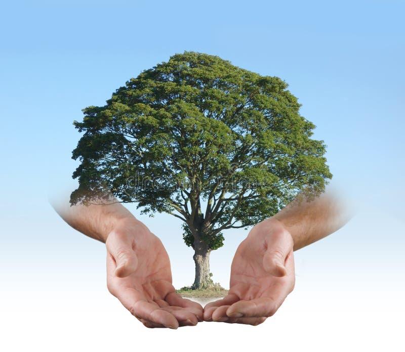В безопасных руках хирурга дерева стоковая фотография rf