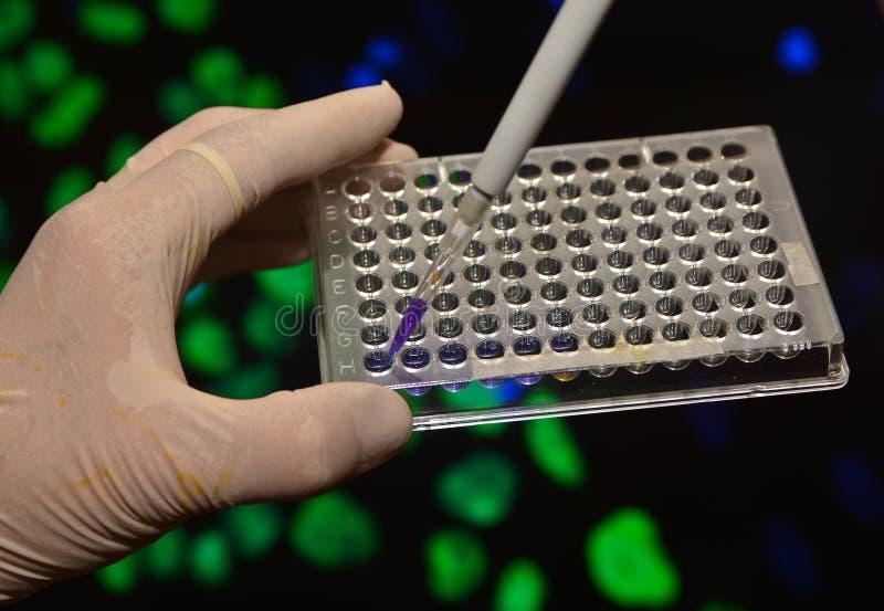 В биомедицинской лаборатории стоковые фото