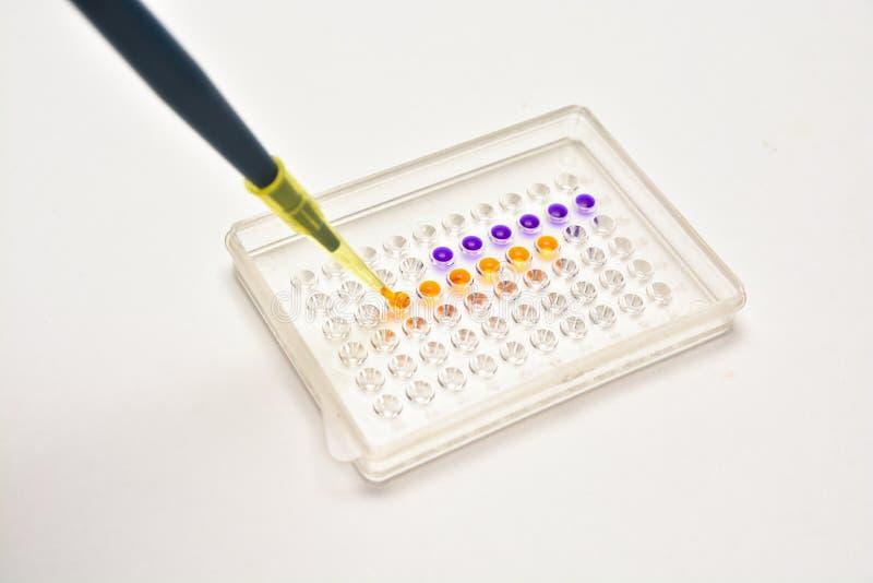 В биомедицинской лаборатории стоковая фотография rf