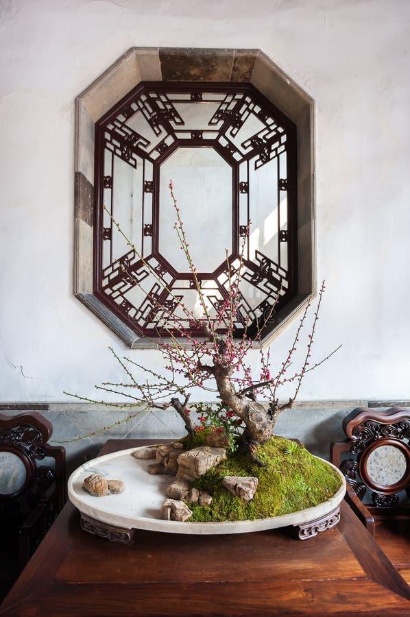 В горшке дерево на саде рощи льва, Сучжоу бонзаев, Китай стоковая фотография rf