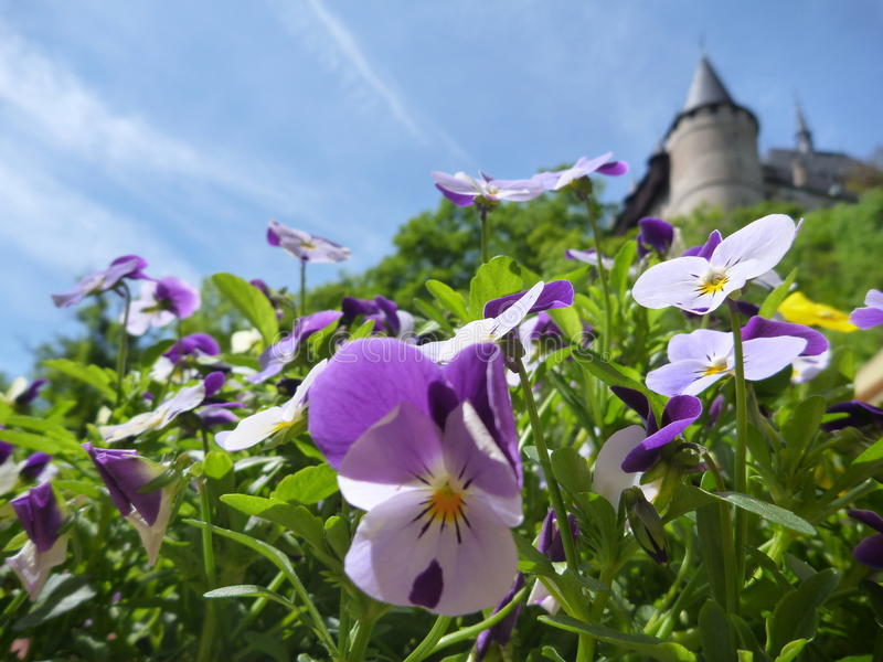 В горшке красочные цветки с замком Karlstejn возвышаются в предпосылке стоковая фотография rf