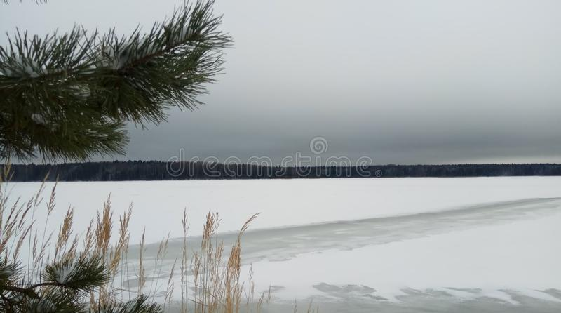 В дереве ветвей леса зимы в снеге Горизонт снега Обои предпосылки стоковые фотографии rf