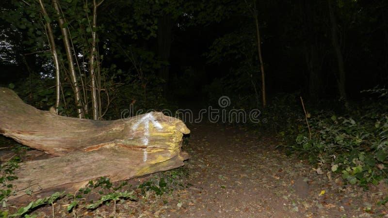 В древесины стоковое фото