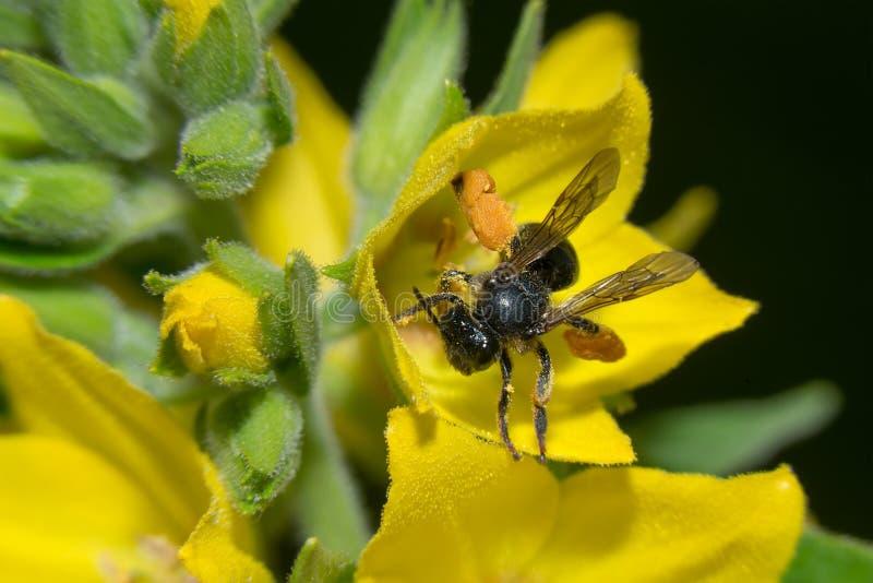 В желтом цветке стоковые изображения rf