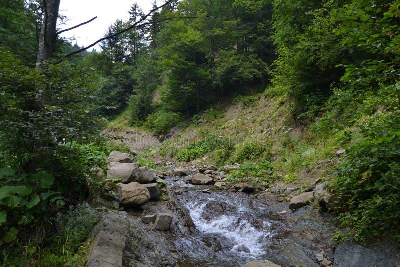 В зеленом лесе подачи реки стоковая фотография