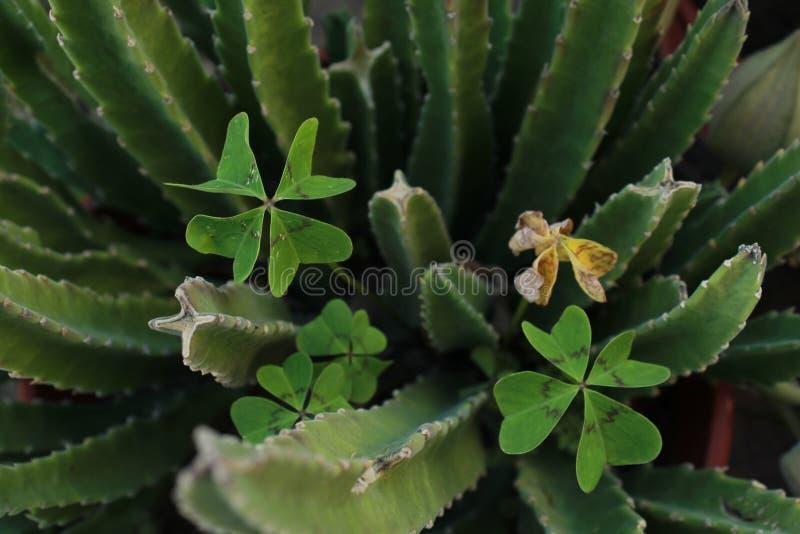 В зеленом цвете стоковая фотография