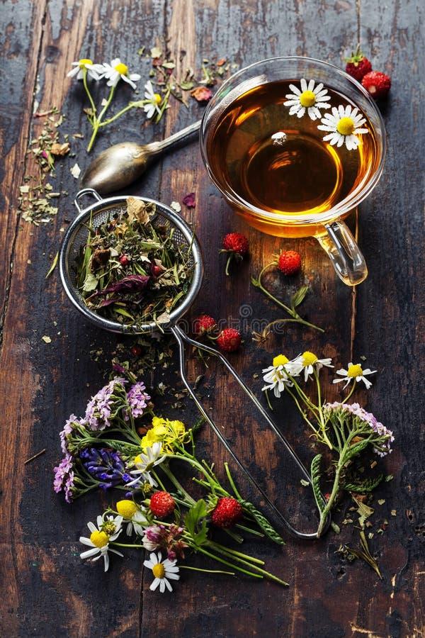 вливания horsetail фокуса equisetum чашки arvense чай стеклянного травяного naturopathy селективный стоковые фотографии rf