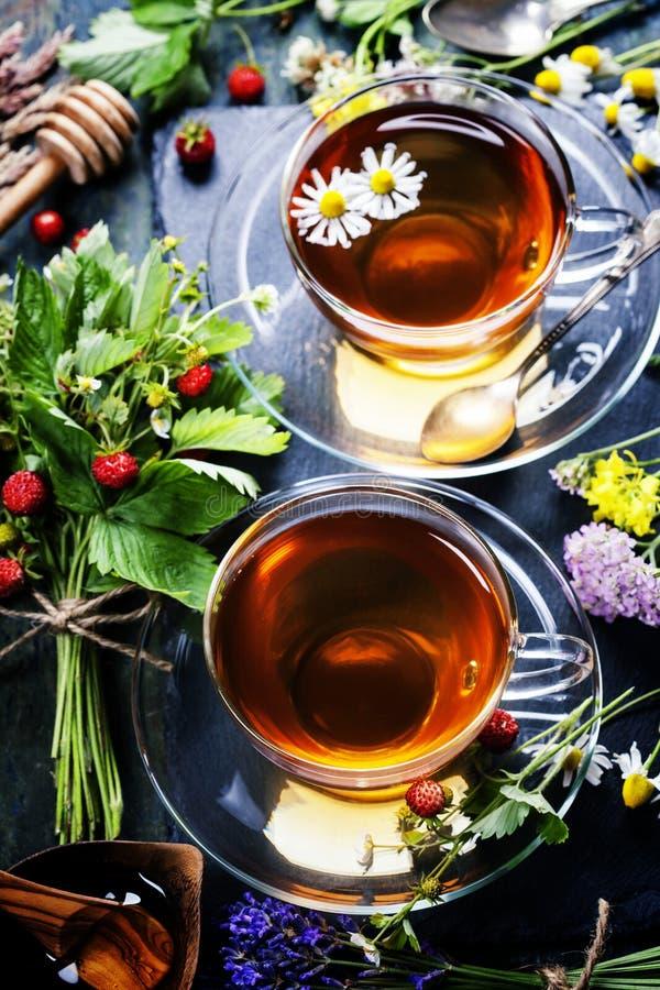 вливания horsetail фокуса equisetum чашки arvense чай стеклянного травяного naturopathy селективный стоковые изображения rf