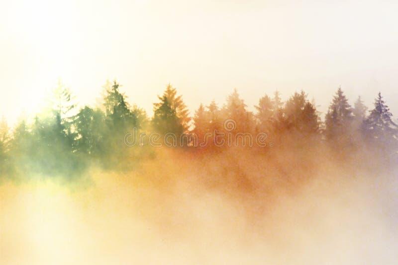 Влияние фильма Розовый рассвет в холмистом landcape Утро осени туманное в красивые холмы Пики деревьев стоковое изображение rf