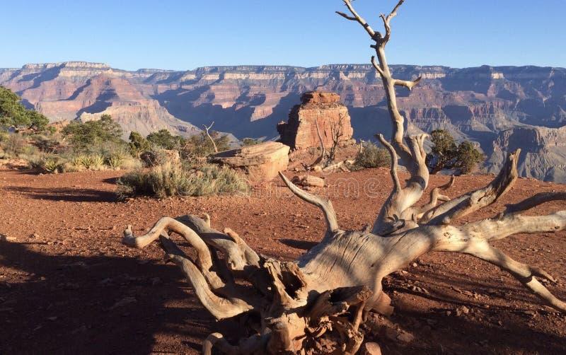 В каньоне стоковые изображения rf