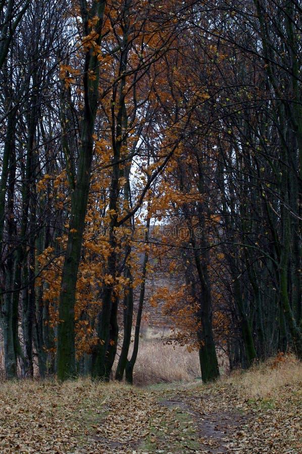 В конце от ноября стоковое изображение rf