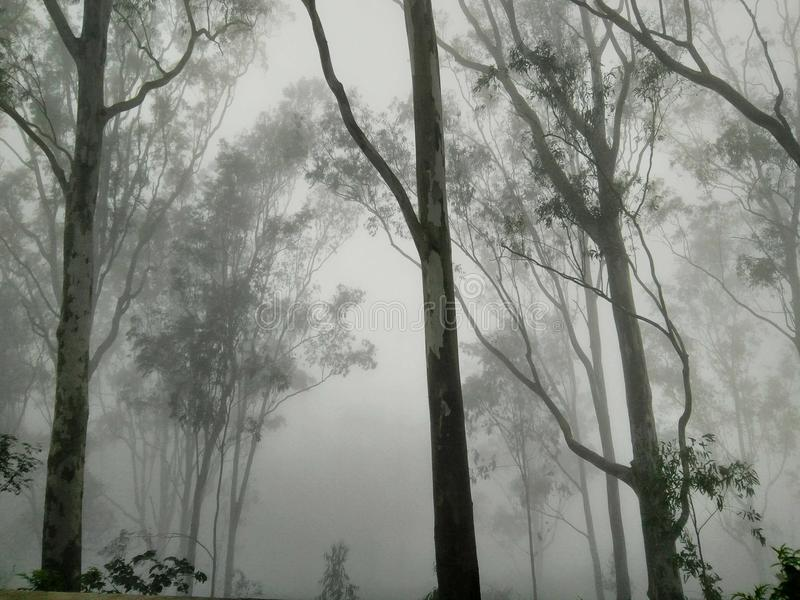 В к лесе в зиме стоковая фотография rf