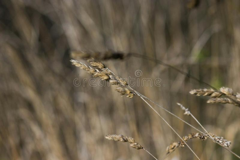 В к поле в Италии стоковое изображение