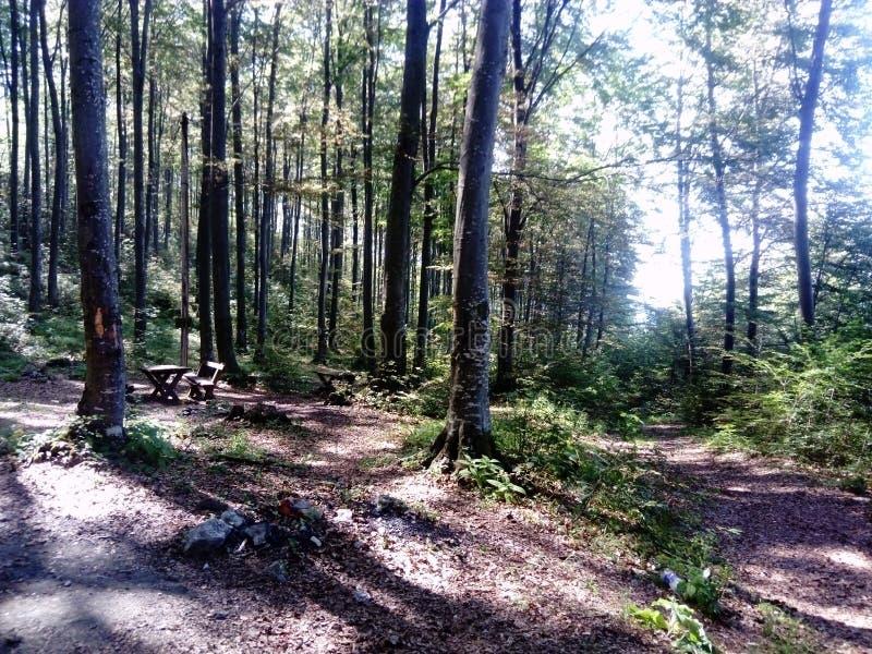 В лесе с деревьями стоковое фото rf