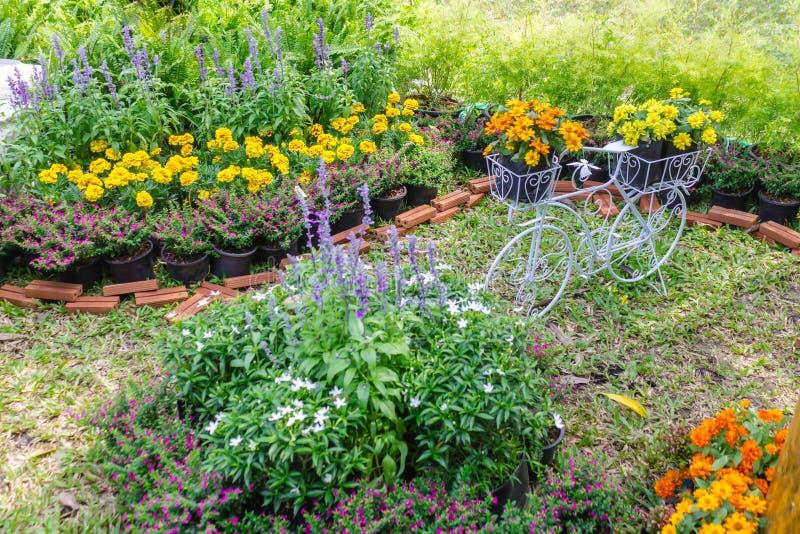 В домашнем саде стоковая фотография rf