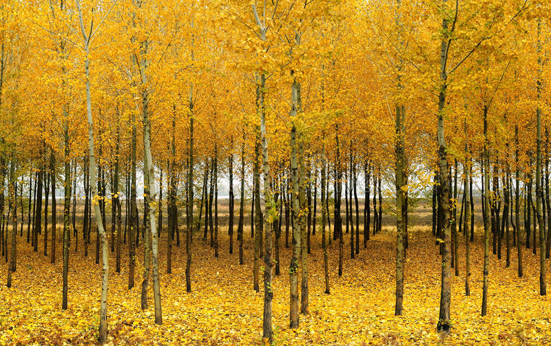 В осени древесины стоковые изображения rf