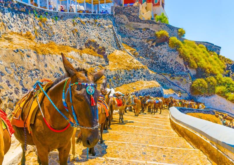 В острове Santorini в Греции стоковые изображения