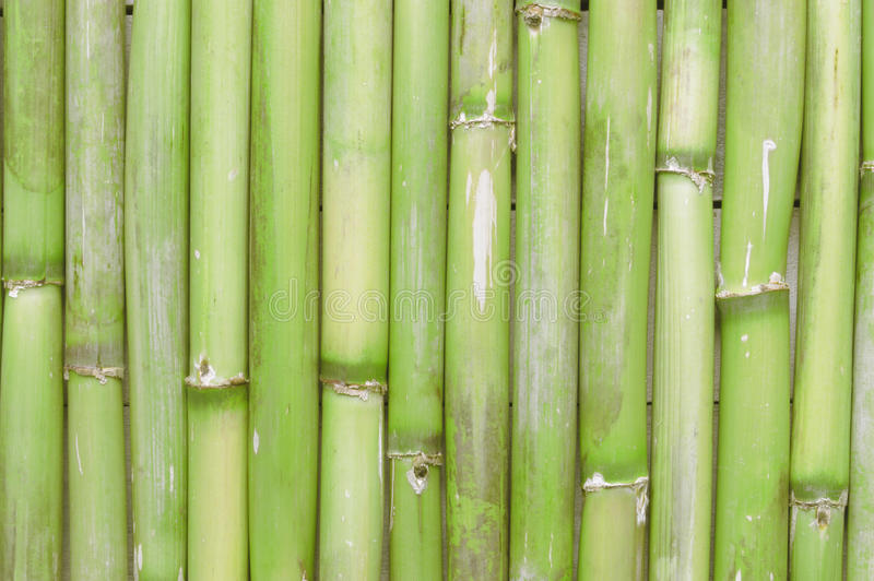 Вдохновляющая, естественная зеленая бамбуковая предпосылка создавая сцену Дзэн стоковое фото rf