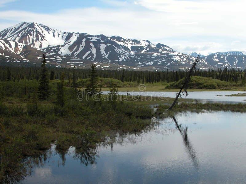 Вдоль шоссе Denali - Аляски стоковое фото