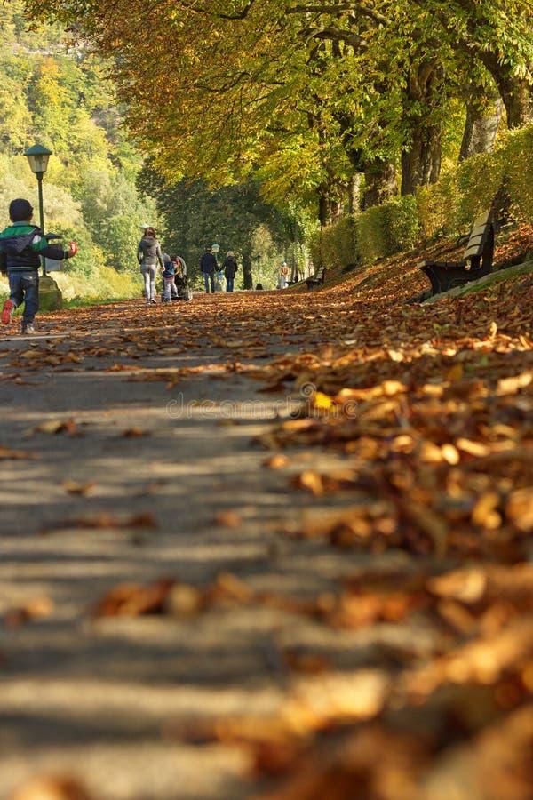 В парке на солнечный день осени стоковая фотография rf
