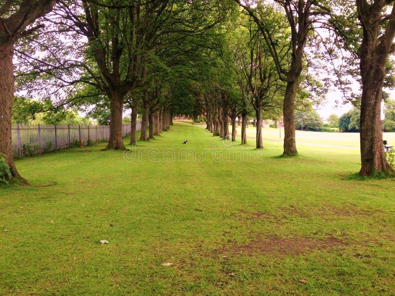 В парке стоковое изображение