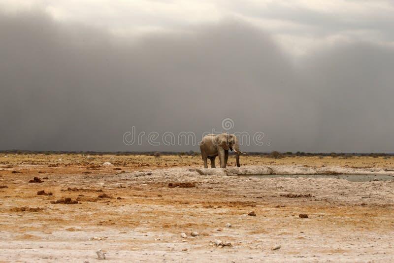 В приходя пыльной буре около, который нужно ударить в лотке Ботсване Nxai стоковое фото